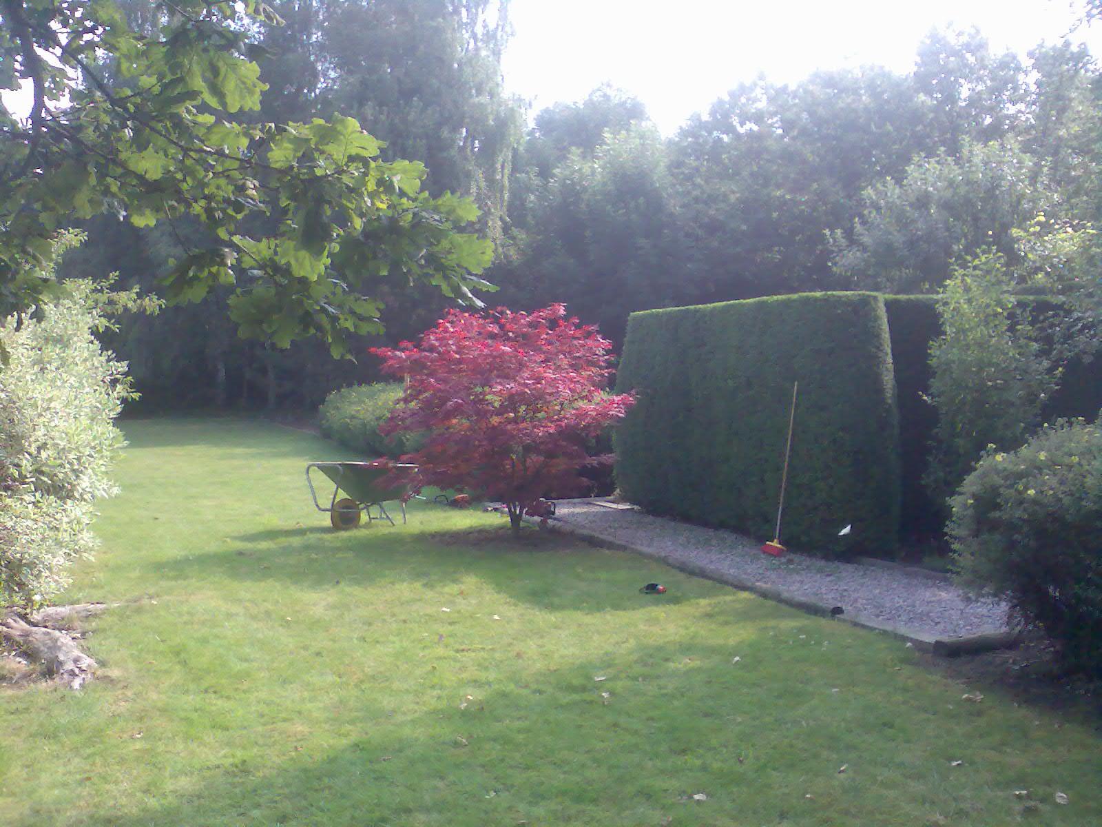 Haies abbatage elagage levecq for Elagage entretien jardin